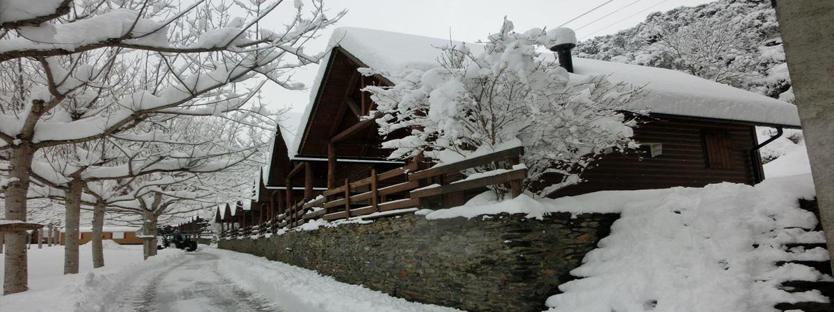 Dies de neu